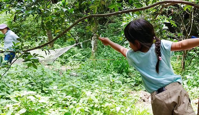 唐湊の森の研究